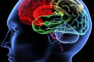 Improving communication within the brain